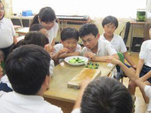 東星学園 校長・大矢正則 カトリック ミッション 男女 キュウリの収穫(5)
