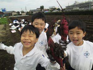 東星学園 校長・大矢正則 カトリック ミッション 男女 おいもほり(5)