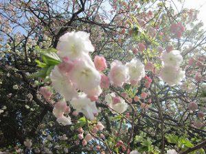 東星学園 校長 大矢正則 カトリック ミッション 男女 2018年度 春(1)