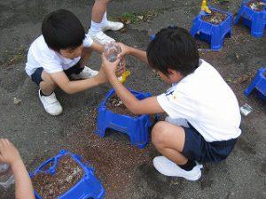 東星学園 校長 大矢正則 清瀬 私立 小学校 1年生、朝顔の種まき(4)