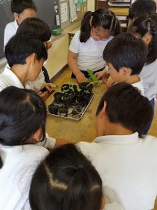 東星学園 校長 大矢正則 清瀬 私立 小学校 3年生 理科(4)