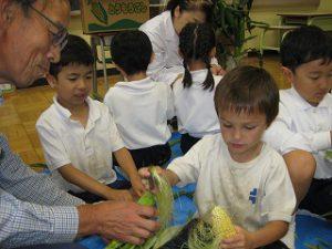 東星学園 校長・大矢正則 清瀬 私立 小学校 1年生 とうもろこしの皮むき体験(2)