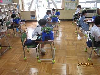 東星学園 校長 大矢正則 清瀬 私立 小学校 学校再開~1年生・あさがおの観察~(4)